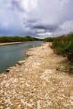 Sponda del fiume al parco nazionale dei terreni paludosi Immagine Stock