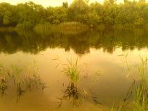 Sponda del fiume con le canne e gli alberi immagine stock