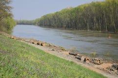 Sponda del fiume dopo il taglio di legno Fotografia Stock Libera da Diritti