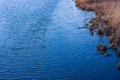 Sponda del fiume, ondulazioni sull'acqua, alta erba Fotografia Stock Libera da Diritti