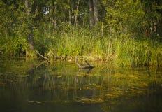 Sponda del fiume selvaggia Fotografia Stock Libera da Diritti