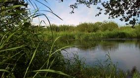 Sponda del fiume in un'erba verde Immagine Stock