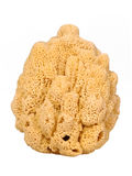 Sponge Royalty Free Stock Photo