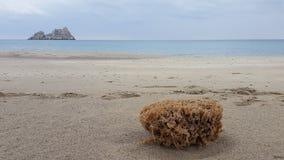 Sponge. A sponge at a beach in Crete Stock Photos