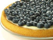Sponge cake. Closeup of fresh fruit sponge cake with pudding Stock Images