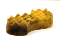 Sponge with clipping path (at ALL sizes) Stock Photo