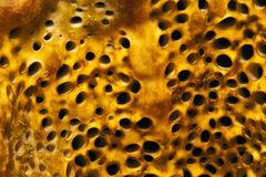 Sponge close up Stock Photography