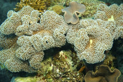 Sponge and coral reef Royalty Free Stock Photography