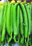 Sponge cucumbers Royalty Free Stock Image