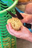 Sponge Cutter trims sea sponge tampon in street shop on Symi island Rhodes, Greece stock photo
