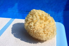 Sponge on a diving board Royalty Free Stock Images