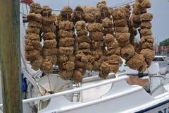 Sponge Harvest Royalty Free Stock Image