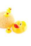 Sponge and rubber ducks Royalty Free Stock Image