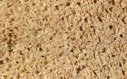 Sponge texture. Stock Image