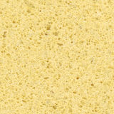 Sponge texture Royalty Free Stock Photo