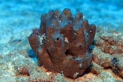 Sponge. In the waters of the atlantic ocean Royalty Free Stock Photos