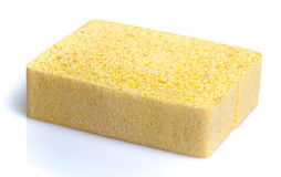 Sponge Stock Photos