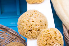 Sponge Royalty Free Stock Photography