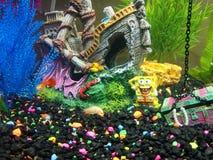 Sponge bob treasure v2 royalty free stock image
