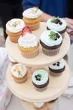 Spongecake or muffin with cream Stock Photos