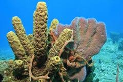 Sponges Stock Image