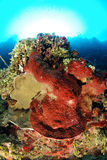 Sponges in coral reef Stock Photo