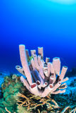 Sponges on a coral reef Stock Images