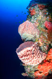Sponges and corals on a tropical coral reef wall Stock Photos