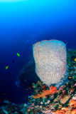 Sponges and corals on a tropical coral reef wall Stock Image