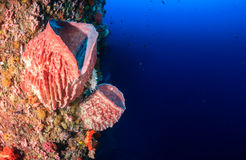 Sponges and corals on a tropical coral reef wall Stock Photo
