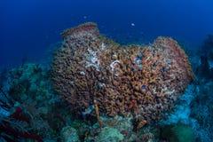 Sponges on Deep Reef in Caribbean Stock Photo