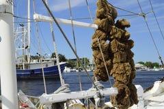 Sponges hanging on boat in Tarpon Springs, Florida. Royalty Free Stock Image
