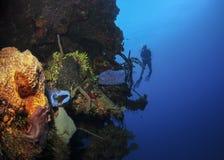 Sponges - Roatan, Honduras. Sponges grow on a rock formation in Roatan, Honduras royalty free stock photography