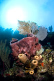 Sponges and sea fan Stock Photo