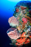 Sponges and soft corals on a tropical reef Stock Photography