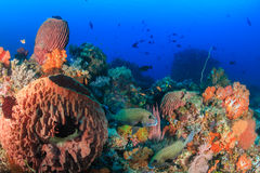 Sponges and tropical fish on a deep water reef Stock Photo