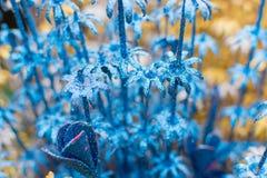 Spongewood ha fatto i fiori colorati artificiali Fotografia Stock Libera da Diritti