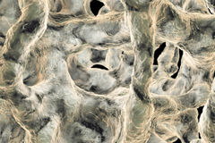 Spongy bone tissue affected by osteoporosis Royalty Free Stock Photos