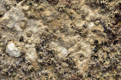 Spongy stone background of the sea floor Royalty Free Stock Images