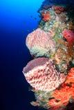 Sponsen en koralen op een tropische koraalrifmuur Stock Foto's