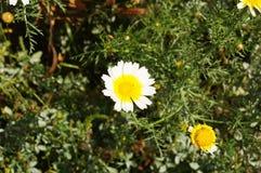 Spontane bloem in canion Stock Foto