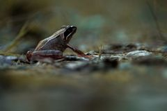 The spontaneous frog in the mountain royalty free stock photography