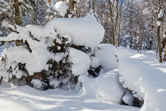 The spontaneous sculpture snow on the winter forest Stock Image