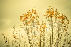 Spontaneous vegetation royalty free stock photography