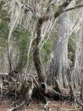 Spookachtige Bomen Royalty-vrije Stock Afbeeldingen
