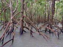 Spookachtige mangroven, het Puntreserve van het Oosten, Darwin, Australië Royalty-vrije Stock Fotografie