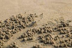 Spookkrab die zandballen op het strand maken Kleine krab die ho graven Stock Fotografie