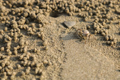 Spookkrab die zandballen op het strand maken Kleine krab die ho graven Stock Afbeelding