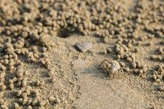 Spookkrab die zandballen op het strand maken Kleine krab die ho graven Stock Foto
