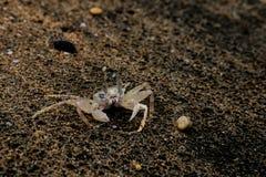 Spookkrab in het zand Stock Afbeelding